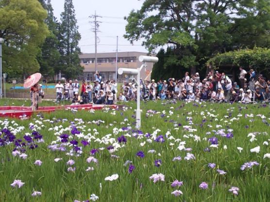 油ヶ渕菖蒲園